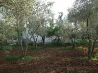 Villa with land and olive groves in Esen